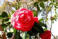 初夏のバラの見ごろ